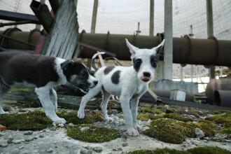"""Cum au devenit câinii fără adăpost """"mascotele"""" zonelor abandonate de la Cernobîl"""