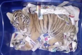 Cine este adolescentul care a încercat să trimită un tigru printr-un colet poștal