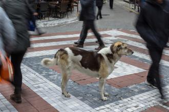 Restaurantele din Pyeongchang refuză să scoată felurile cu câine din meniu în timpul JO