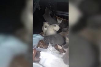 Traficul cu animale de companie, afacere de coşmar.