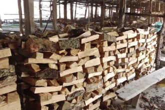 Defrișarea pădurilor pare de neoprit, în ciuda sancțiunilor impuse de autorități