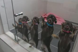 Singura companie care clonează câini, un mare succes. Prețul pentru o copie identică