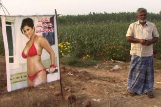 """Un fermier a folosit un poster cu o actriță de filme pentru adulți, pentru a-și proteja recolta. """"A funcționat"""""""