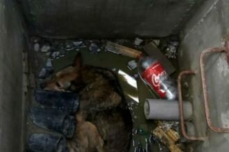 Un câine care a căzut într-un canal adânc, salvat de pompierii din Sibiu