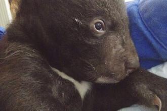 Un pui de urs care a fost abandonat într-o pungă de plastic, salvat de îngrijitori