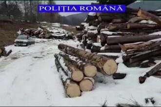 Defrișările, de neoprit: cantitate mare de lemne descoperită pe un teren