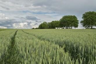 Țara căreia nu-i mai ajunge pământul pentru a-și hrăni populația și se extinde masiv