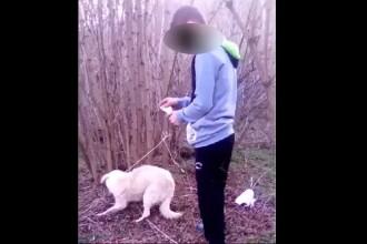 Imagini șocante în Dâmbovița. Un adolescent dă foc unui câine legat de un copac