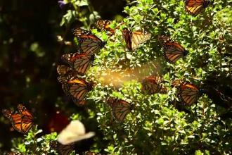 Fenomenul care ar putea duce la dispariția insectelor de pe Pământ