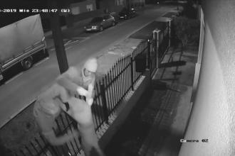 Trei indivizi filmați în timp ce fură un pui de labrador dintr-o curte, în Mureș