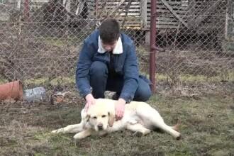 Labradorul furat din curte a fost găsit. Hoții voiau să îl vândă pe net, cu 220 de euro