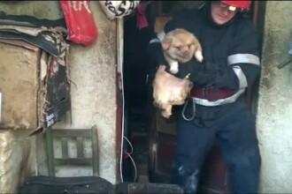 Căței și pisici, salvați de pompieri dintr-o locuință care ardea, în Ploiești