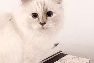 Averea uriașă pe care o va moșteni Choupette, pisica designerului Karl Lagerfeld