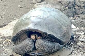 Amendă uriașă pentru un şofer care a călcat cu maşina o broacă ţestoasă în Galapagos