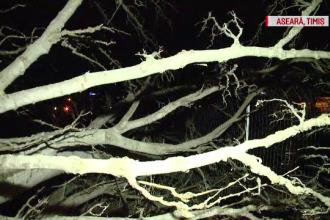 Drumuri blocate din cauza vântului şi viscolului. Copaci şi stâlpi au căzut pe şosele