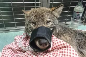 Au salvat un câine din râul îngheţat. Ce au descoperit apoi despre animal i-a înspăimântat