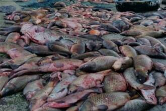 """Români condamnați în Italia pentru pescuit ilegal. Legătura cu o anchetă """"România, te iubesc!"""""""