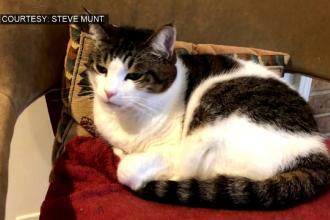 Cum a ajuns cenușa unei pisici în spațiu: