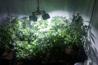 Cultură indoor de cannabis, descoperită la locuinţa unui bărbat din Caracal. VIDEO