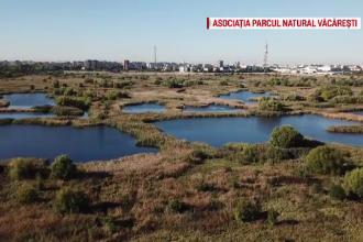 Cum va fi transformată Delta Văcărești într-una dintre atracțiile Capitalei