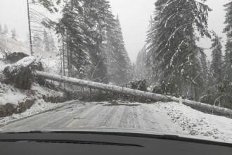 Fenomene violente în țară. La munte ninge abundent, viscolul a rupt copaci și stâlpi