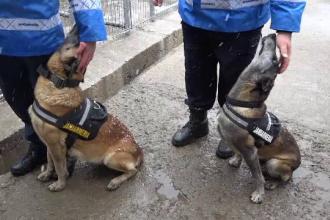 Povestea celor doi câini care și-au dedicat viața Jandarmeriei Botoșani