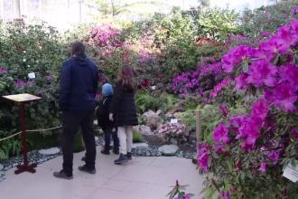 Principalele atracții de la grădina botanică din Iași. Cele mai apreciate exponate