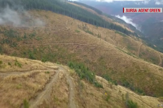 România, avertizată de UE. Cum a dispărut o pădure de dimensiunea Bruxelles-ului în Maramureș