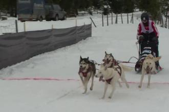 Concurs destinat atelajelor trase de câini, organizat în Pasul Tihuța