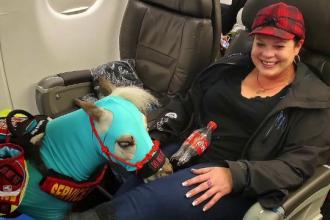 O femeie a reuşit să urce cu poneiul în avion. Ce motiv a invocat ca să ia animalul cu ea