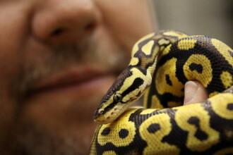 Reacția pompierilor când găsesc două fețe de pernă pline cu șerpi