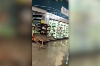 Creatura găsită de clienţi printre rafturile unui supermarket. VIDEO viral