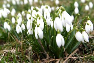 Vremea în luna martie. ANM anunță temperaturile până pe 8 Martie