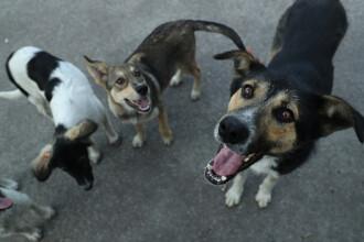 Țara care adună animalele fără stăpân de pe străzi de teama coronavirusului
