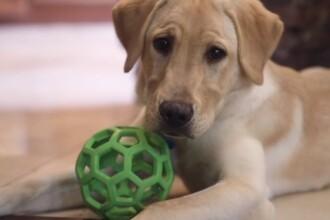 Suma plătită de o familie pentru a-și clona câinele decedat. Ce spun specialiștii