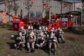 Urșii panda au primit daruri înaintea Noului An Chinezesc. Ursuleții au pozat într-un centru de ocrotire