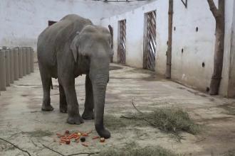 Cei mai bătrâni elefanți din România, sărbătoriți la Târgu Mureș. Ce vârste au