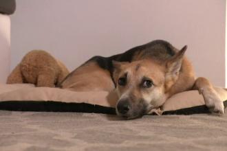 Animalele de companie dezvoltă aceleași simptome de Covid precum copiii. Ce s-a aflat despre transmiterea la om