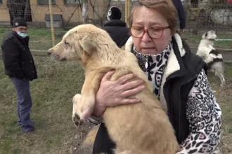 Zeci de câini, ţinuţi în mizerie şi înfometaţi, într-un adăpost insalubru din județul Arad. Imagini revoltătoare