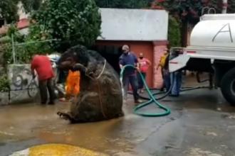 """""""Șobolan gigant"""" din gunoi, în centrul unei mari capitale! Fenomenul care l-a creat"""