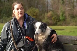 În Marea Britanie, câinii iau lecții de socializare și participă la sesiuni de terapie