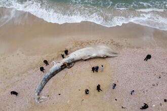 Creatura uriașă descoperită pe o plajă din Israel. GALERIE FOTO