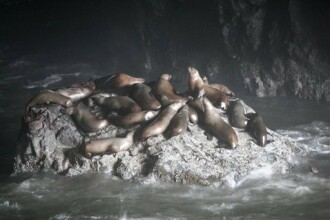 Leii de mare din San Francisco s-au mutat in statul vecin, Oregon!