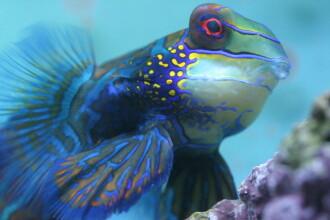 Cei mai frumosi pesti exotici se nasc la Acvariul din Galati!