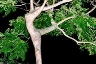Arestat dupa ce a incercat sa faca sex cu un copac!