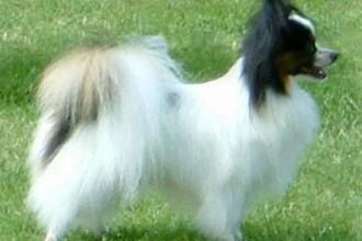 Cei mai frumosi catei, prezentati la concursul canin anual din New York
