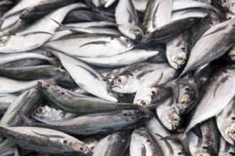 Cele 20 de tone de pesti gasiti morti in Norvegia, disparuti fara urma. Nimeni nu stie unde sunt