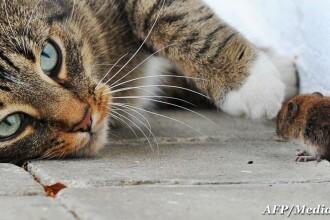 Un miliardar a murit mancand friptura de pisica