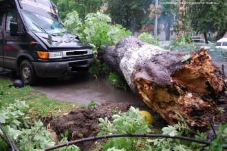 Furtunile din sudul tarii au facut ravagii: copaci cazuti, localitati fara curent, iar un om a murit