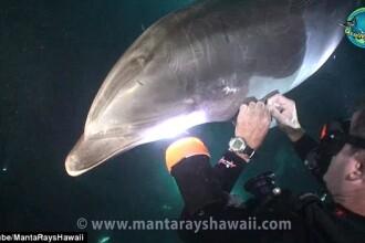 Imagini emotionante cu un delfin, in Hawaii.